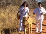Mg Sreekumar And Wife With Lions Photos Became Viral In Social Media