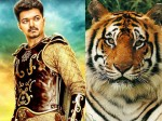 How Will Celebrate Puli S Release Trivandrum Vijay Fans