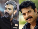 Ss Rajamoulis Plan His Next With Mammootty