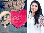 Amala Paul Valentine Day Celebration With Pet Dog