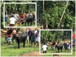 Tovino Thomas Oru Kuprasidha Payyan Stunt Sequence