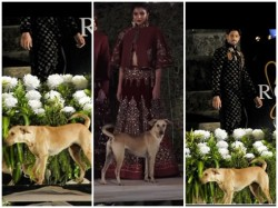 Stray Dog Crashed Sidharth Malhotra S Ramp Walk